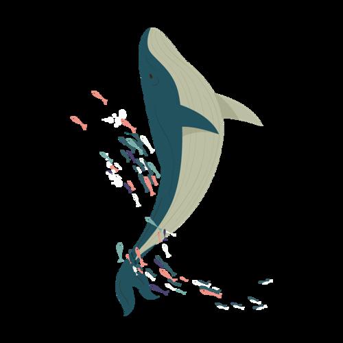 鲸鱼手绘插画图片