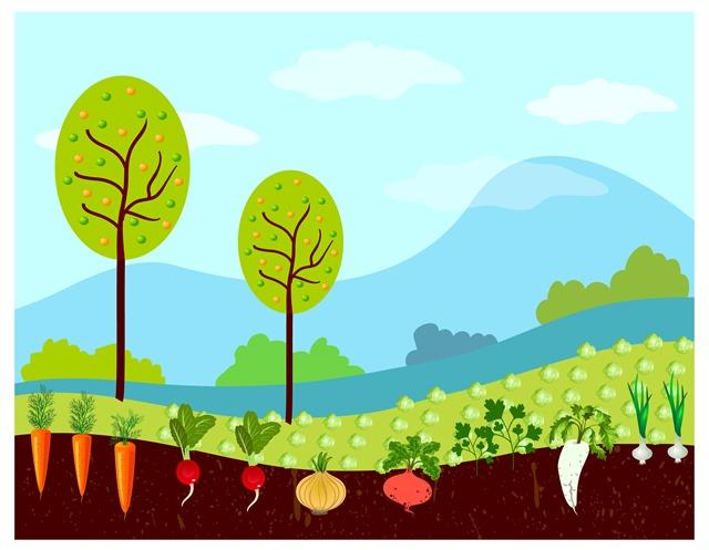 绿化草地插画