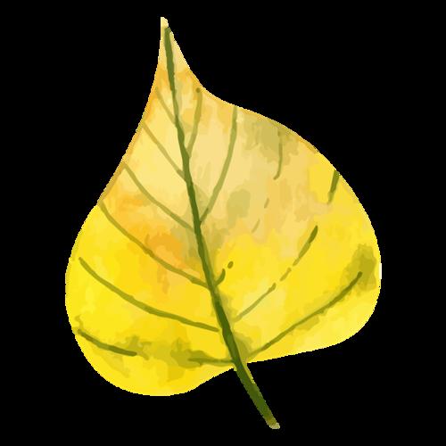 秋季银杏叶