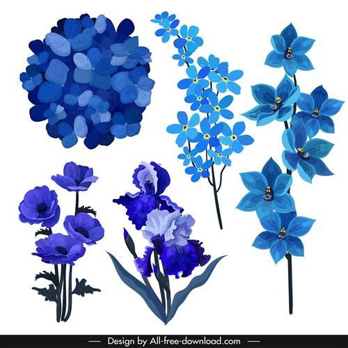 蓝色花卉免抠图