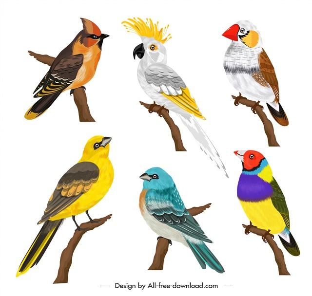 各种鸟类图片