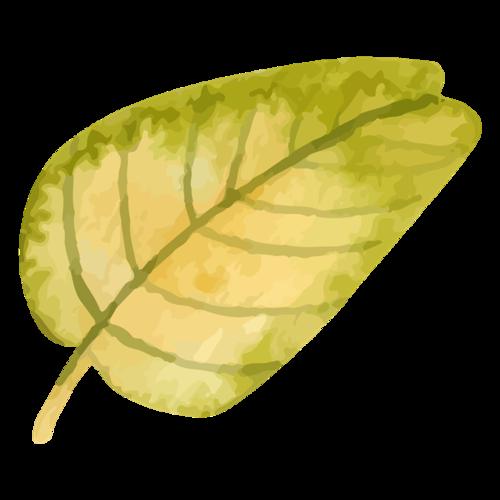 手绘秋天树叶图片