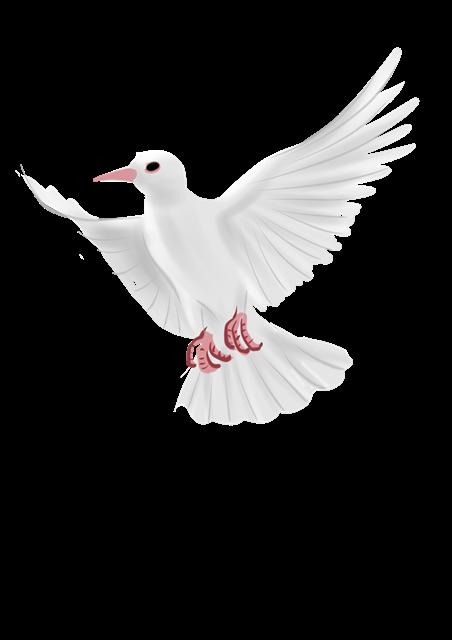 展翅和平鸽矢量图