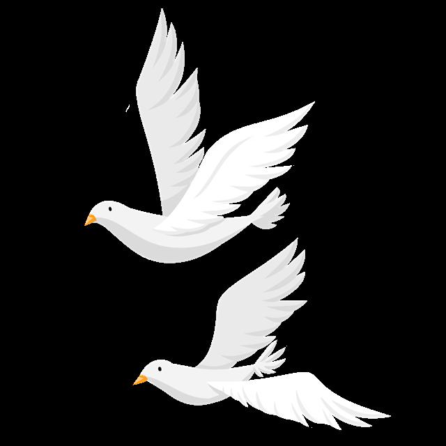 飞翔的白鸽