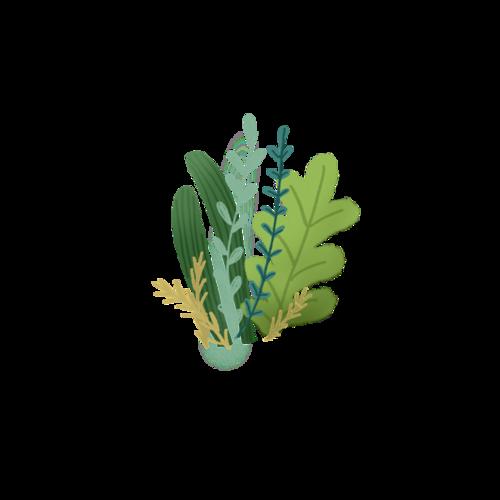 手绘植物装饰