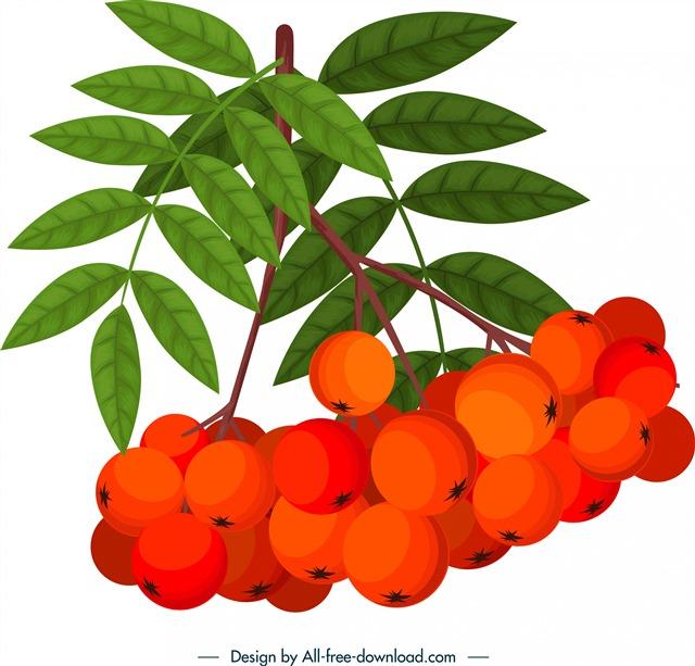 春夏红色水果