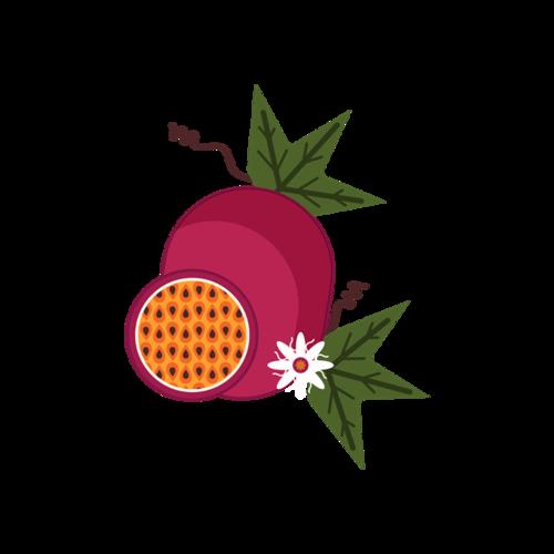 红色火龙果