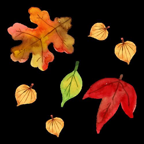 飘落的树叶