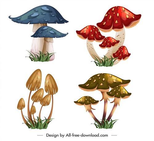 野生的彩色蘑菇