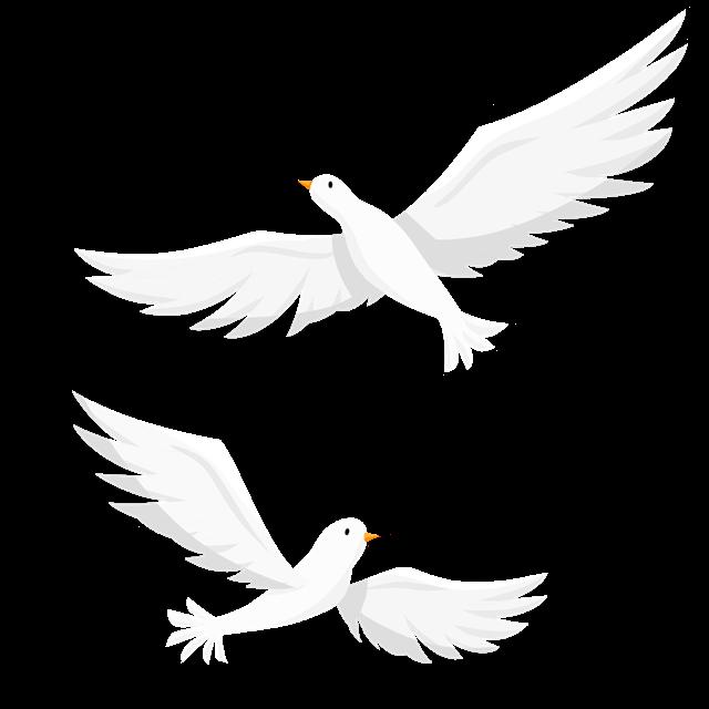 建党白鸽图片