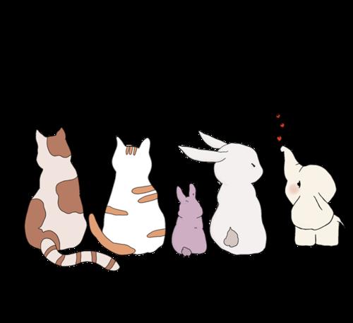 可爱小动物背影图片