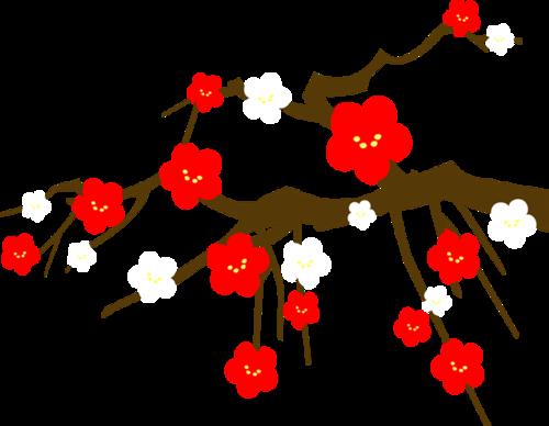 冬天梅花樱花