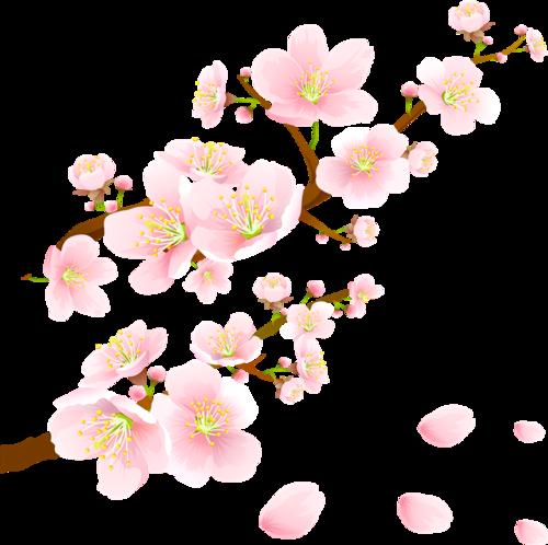 飘落的樱花花瓣
