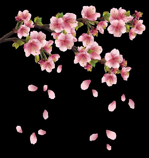 日本樱花花瓣