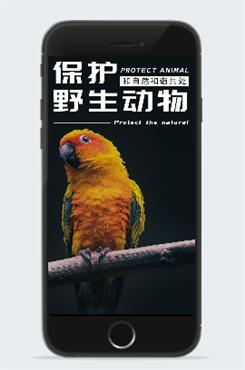 保护野生动物活动海报