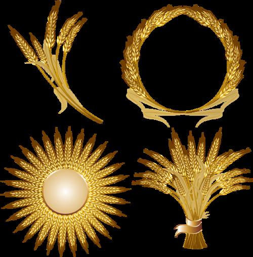 粮食小麦稻谷
