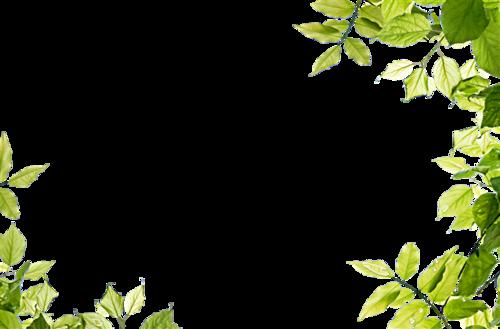 花草植物装饰边框