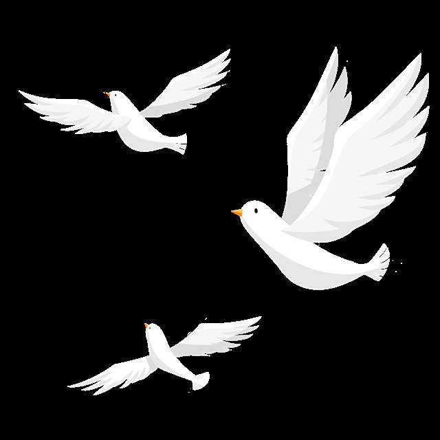 白色飞鸽矢量图