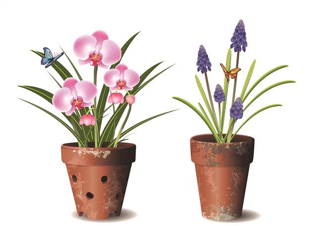 花朵植物盆栽