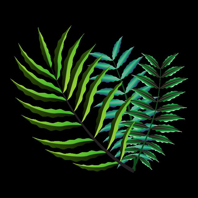 绿色热带树叶