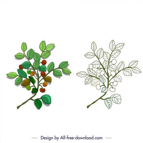 植物绿叶对照图