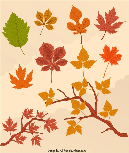 各种秋天树叶