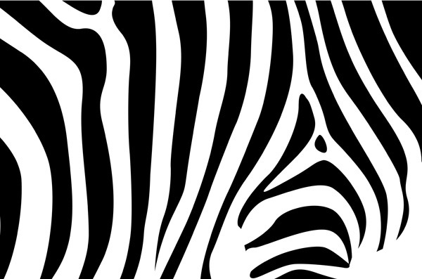 斑马纹背景图片