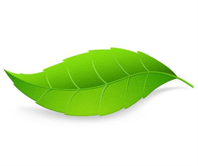 绿叶装饰画图片