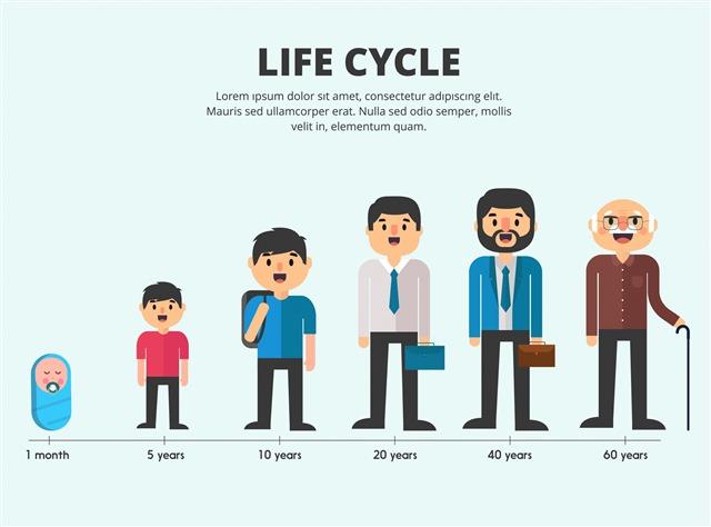 男人生长过程卡通人物图片
