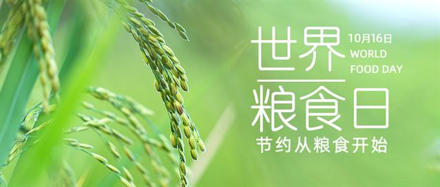 2020世界粮食日宣传图片