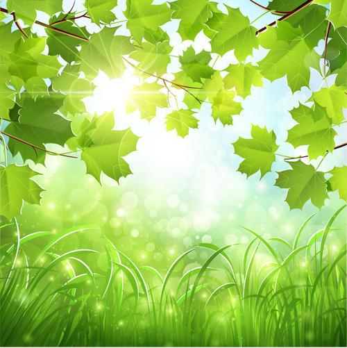 春天绿色树叶背景图片