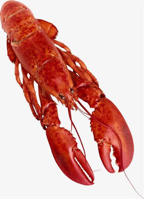 小龙虾高清摄影图片