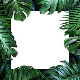 棕榈叶背景图