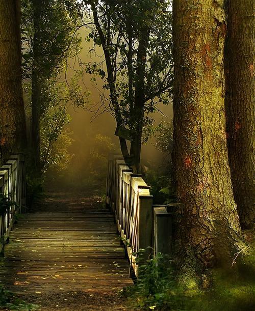 森林小桥背景