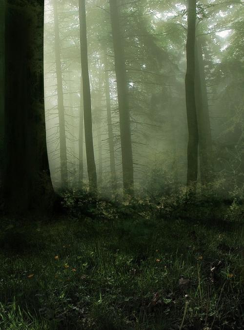 云雾森林背景图