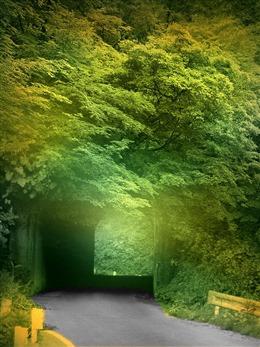 森林隧道手机壁纸