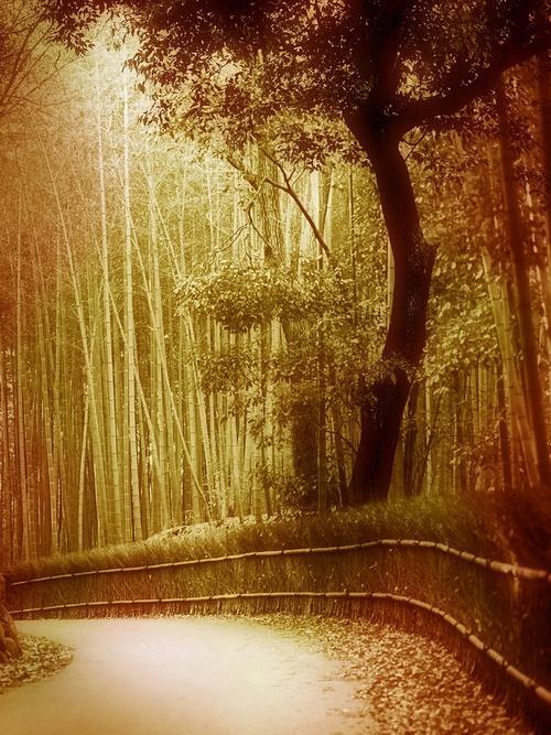 幽静小路背景