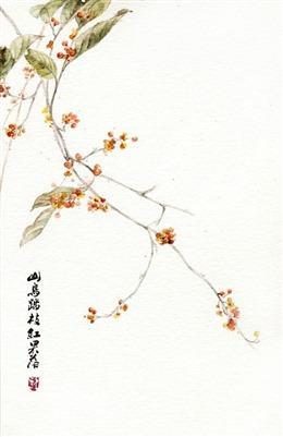 一枝桂花唯美图片