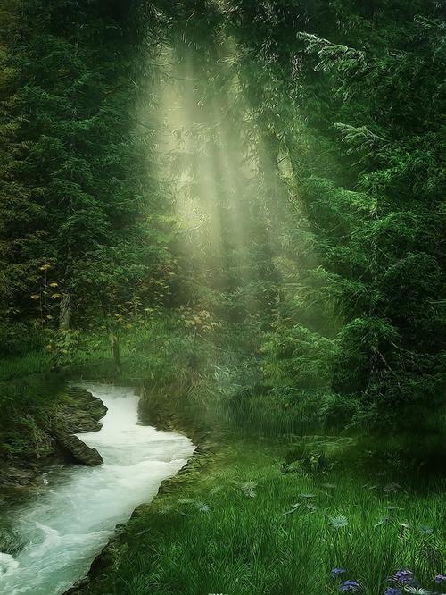 唯美森林美景图片