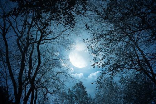 月下树影风景图片