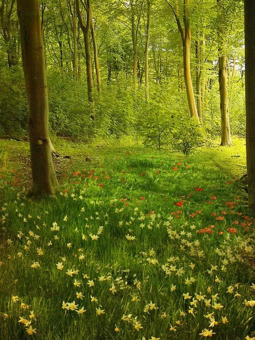 茂密树林风景油画背景图片