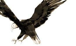 老鹰水墨画图片