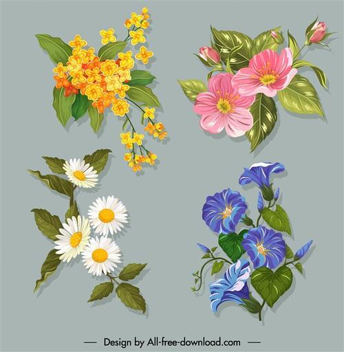 植物花草插画