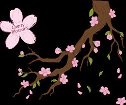 唯美樱花装饰图片