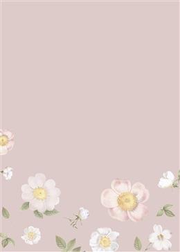 植物花卉叶子粉色背景