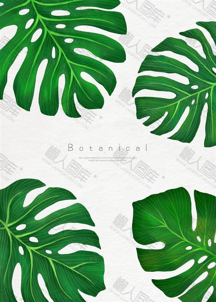 北欧风手绘热带植物背景图片