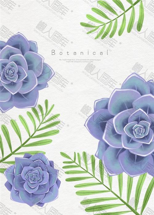 好看的植物花卉背景图片