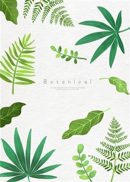 清新热带植物背景图片