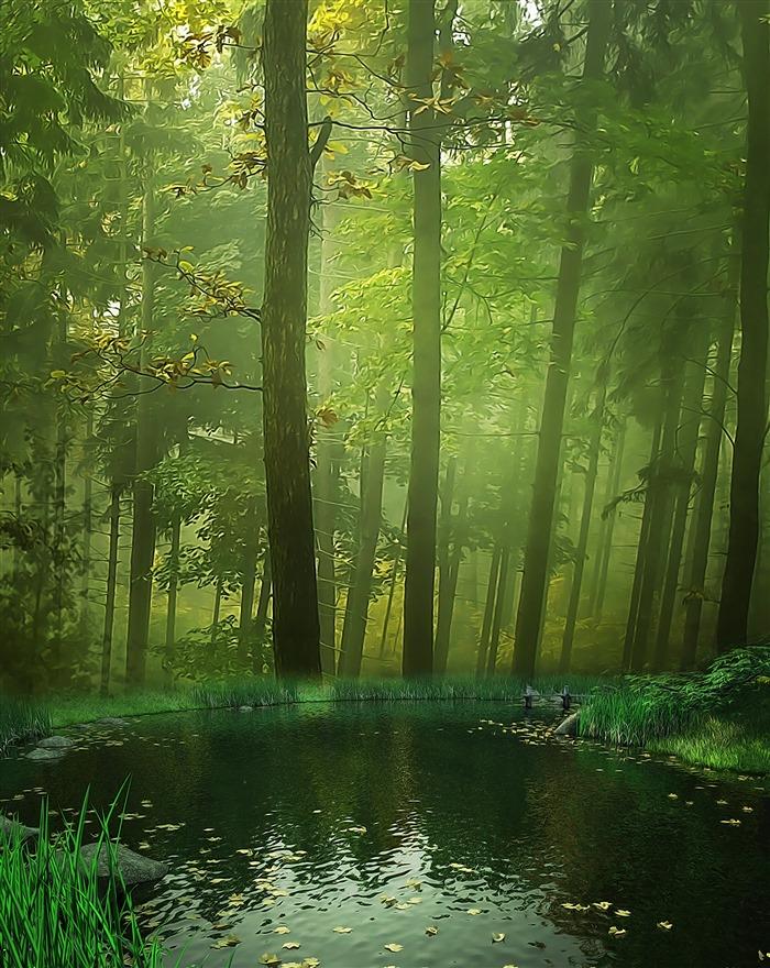 好看的森林背景图片