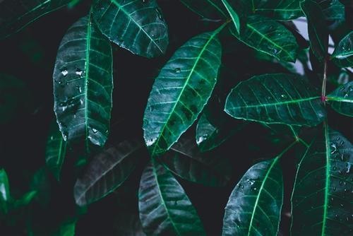 棕榈叶ppt背景